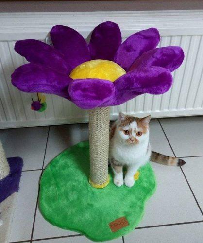 kittenpaal bloem paars 45*45*59CM photo review
