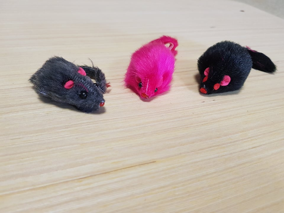 bohemia mimi mouse