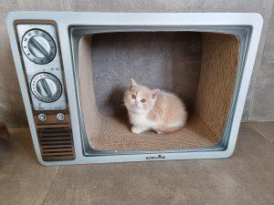 Krabkarton TV 50x35x20cm
