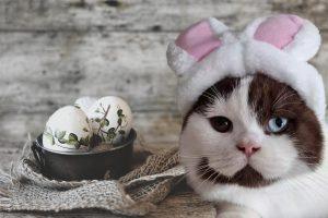 konijnenoren hoedje voor kat en hond